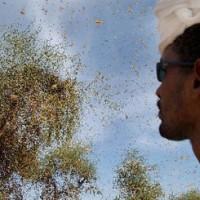 locusts-ethiopia1