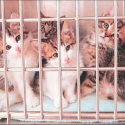 kitten_rescue_1