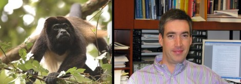 howler monkey vs mulligan -- family tree