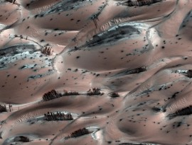 mars trees-sm