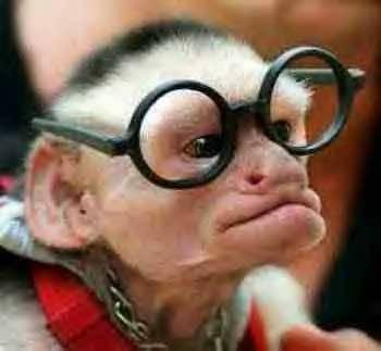 monkeybrain1