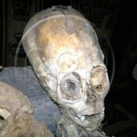 "Skull Shocker! Fossilized Ancestor Of Ace Reporter Joel B. Pollak (Harvard Law, '99) May Be ""Alien"""