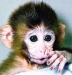 "American Surrender Monkeys: ""Live On Chavez's Free Gasoline Or Die!"""